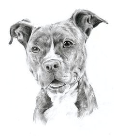 How to Draw A Staffy Dog Easy Drawing Pit Bulls Pitbull by Oocherrytheberryoo Tattoos