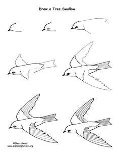 7b4c012f70c3f7a266a5a04d6e5669ce drawing birds flying bird flying jpg