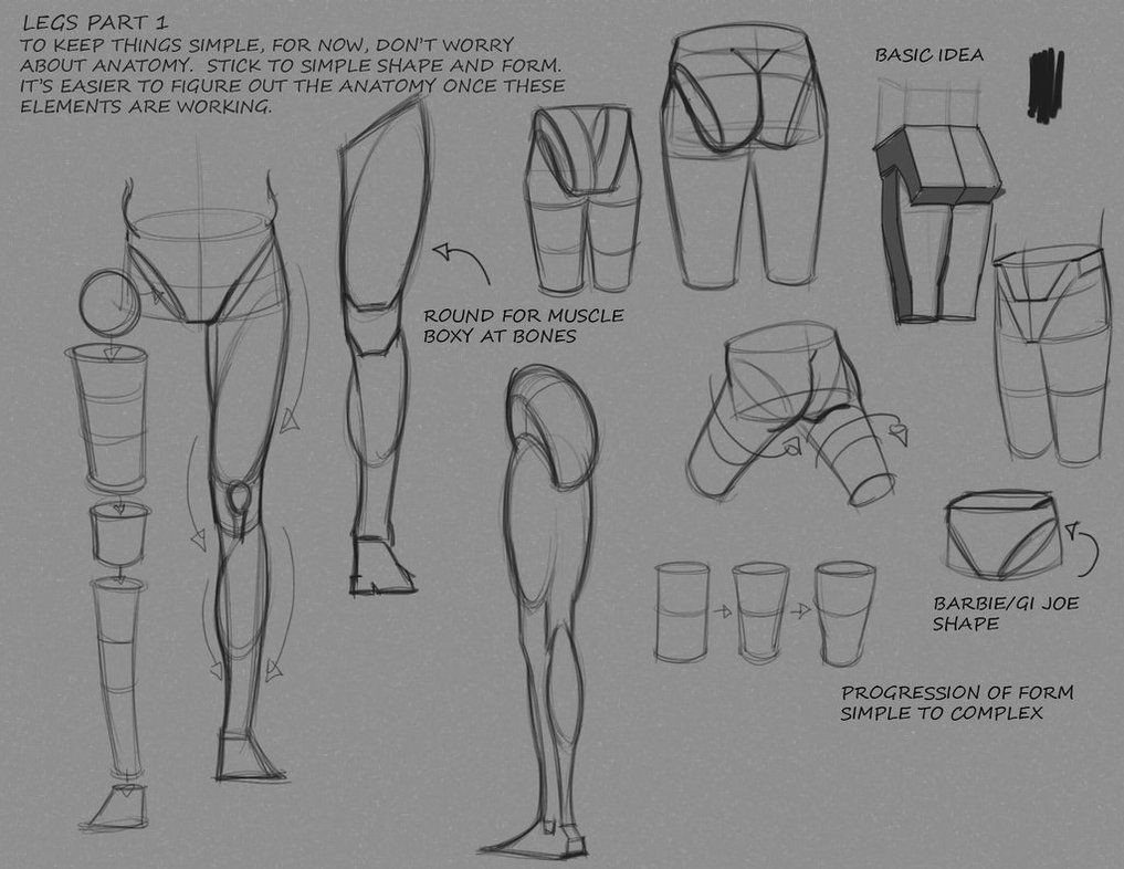 Human Anatomy Easy Drawing Pin On Anatomy Breakdown