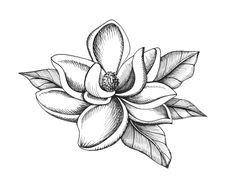 6194bfffecbcc7d245b0e76e7eab1bfd flower sketches flower drawings jpg