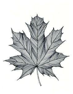 Maple Leaf Easy Drawing Die 8 Besten Bilder Von Kanada Tattoo Kanada Tattoo