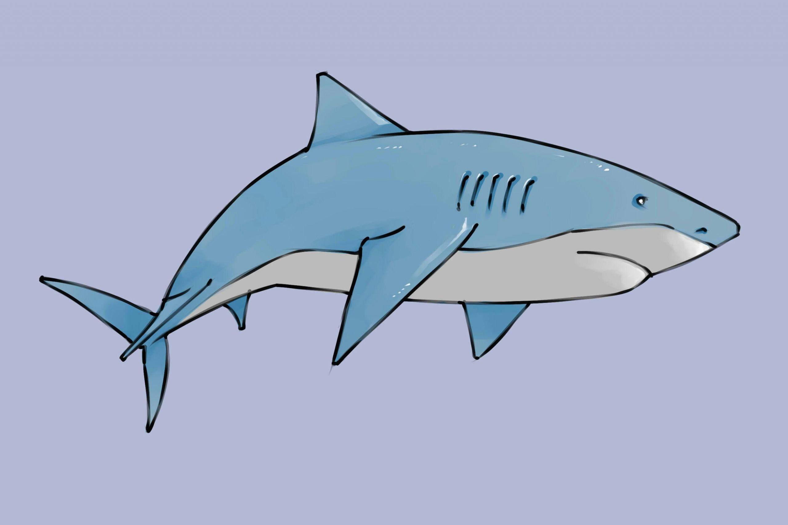Shark Easy Drawing Draw A Shark Animal Drawings Cute Shark Shark Background