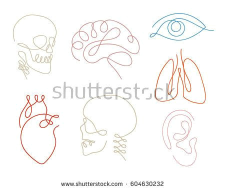 Silhouette Drawing Easy One Line Human organs Set Design Silhouette Logo Design