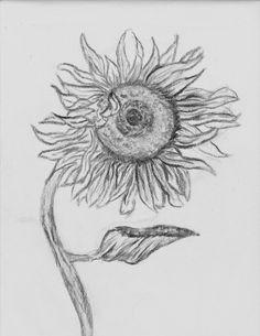 c60dc61963bdafdc38b1b4825dc829e9 draw flowers flower drawings jpg