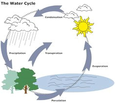 f3d07412736180954eff1b43dc22cbbd water cycle biology jpg