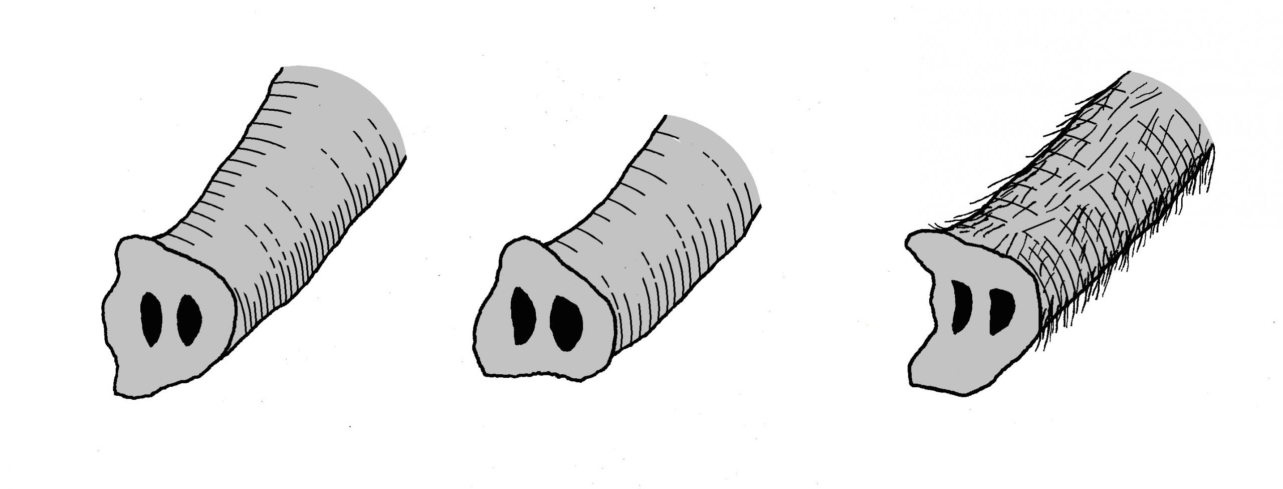 trunks of elephants png