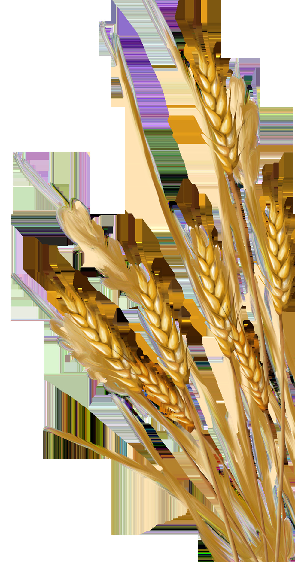 Wheat Drawing Easy Pin by Charudeal On Render Wheat Drawing Watercolor