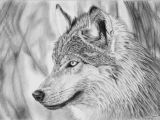 1 Line Drawing Wolf Dessin Loup 1 to Draw Up Wolf Drawings Artwork