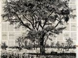 6 Drawing Lessons William Kentridge William Kentridge Marian Goodman Gallery