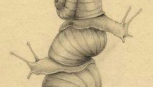 64 Bit Drawing Pin by Abigail Grush On Snails In 2018 Pinterest Snail Art