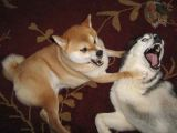 Aggressive Dog Drawing Stop Dog Aggression toward Other Dogs Pethelpful