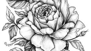 An Easy Drawing Of A Rose Rose with Banner New Easy to Draw Roses Best Easy to Draw Rose
