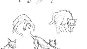 Anatomy Of A Cat Drawing Cat Anatomy Thingies Seiishin Art Ideas and Tutorials