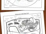 Animal Cell and Plant Cell Drawing Animal Plant Prokaryote Cell Coloring Diagram and Question