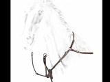 Animal Tracks Drawing Equiline Vorderzeug Bj202