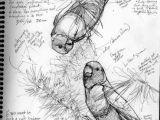 Animals Birds Drawing Draw A Bird Own A Bird Art Sketches Bird Drawings Drawings