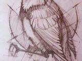 Animals Birds Drawing Sketching Propertions Bird Bird Sketch Bird Drawings