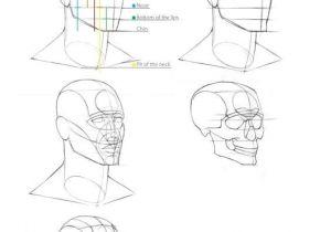 Basics Of Drawing Human Skulls Pin by E I I On I Eµ Pinterest Drawings Anatomy Drawing and