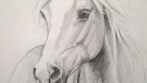 Beautiful Animal Drawings Beautiful Drawing by Carmela Horse Drawings Pencil