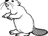 Beaver Drawing Easy 26 Best Beaver Cartoon Images Beaver Cartoon Cartoon