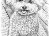 Bichon Frise Drawing Easy 252 Best Lovely Fluffy Things Images In 2019 Poodle Dog