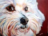 Bichon Frise Drawing Easy Oil Pet Portrait Bichon Frise Www Zapatastudios Com Pet