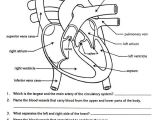 Blank Drawing Of A Heart Free Parts Of the Heart Worksheets Describe the Function Of the