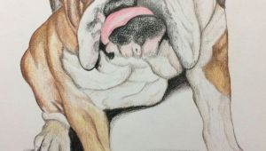 Bulldogs Drawing This is A Bulldog Portrait I Drew I Love Drawing and Bulldogs are