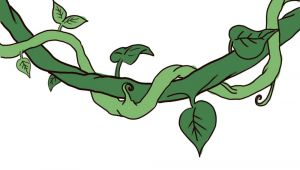 Cartoon Vines Drawing Draw A Jungle Vine Leaves and Vines Drawings Vine Drawing Vines