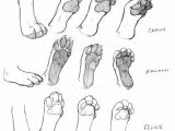 Cat Paw Drawing Easy Pin by Kelsey Reed On Anatomy Tips Cat Drawing Tutorial