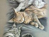 Charcoal Drawing Of A Cat 138 Best 16 Cats Art Pencil Charcoal Drawings Images Pencil