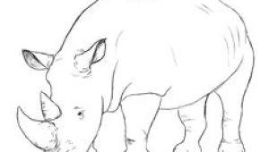 Cute Rhino Drawing 78 Best Rhinos Images Rhinos Rhinoceros Animal Drawings