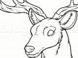 Deer Head Drawing Easy 1327 Best Drawing for Beginners Images In 2020 Drawings