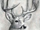 Deer Head Drawing Easy How to Draw A Deer Head Buck Dear Head Step by Step