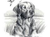 Dog Drawing Artists Golden Retriever Dog Art Print Signed by Artist Dj by K9artgallery