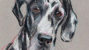 Dog Drawing Commission Spock Pet Portrait Hand Drawn Commission Art by Julie Pfirsch Great