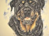 Dog Drawing Hashtags Gouache Painting Www Katyferrari Com Rotties Pinterest