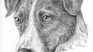 Dog Drawing Jake Pin Von Alissa Auf Hunde Pinterest Drawings Russell Terrier Und