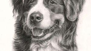 Dog Drawing Net Beautiful Bernese Mountain Dog 3 Drawings Of Dogs Mountain Dogs