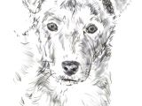 Dog S Mouth Drawing How to Draw A Dog From A Photograph