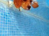 Dog Underwater Drawing 96 Best Swimming Images Drawings Water Illustrations