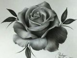 Draw A Real Rose 18 Best Flower Sketch Pencil Images Pencil Drawings Drawings Art