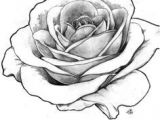 Draw A Real Rose Image Result for Detailed Flower Outline Art Tattoos Rose