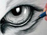 Draw A Realistic Wolf Eye 17 Best Dragon Eye Drawing Images Dragon Eye Drawing Drawings