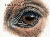 Draw A Realistic Wolf Eye Draw Horse Eyes Step by Step