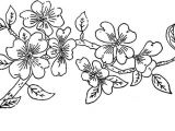 Draw A Rose and Colour It 1886 Ingalls Apple Blossom Branch Patterns ornaments Pinterest