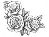 Draw A Rose Vine Resultado De Imagen Para Three Black and Grey Roses Drawing Tattoo