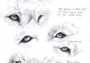 Draw A Wolf Eye Step by Step 146 Best Drawing Aides Images Ideas for Drawing Manga Drawing
