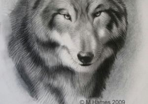 Draw A Wolf Eye Step by Step A Step by Step Guide Of How to Draw A Wolf