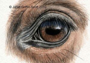 Draw A Wolf Eye Step by Step Draw Horse Eyes Step by Step